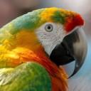 macaw-943228_640
