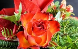 rose-3028519_640