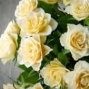 roses-2201477_640