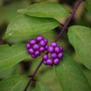 berry-2891191_640 (1)