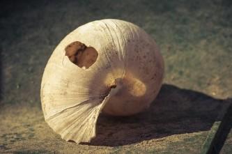 shell-1933591_640