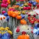 cactus-2721269_640