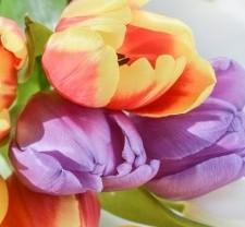 flower-3222648_640