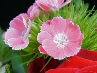 flower-3267014_640