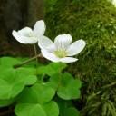 flower-3342622_640