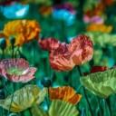bloom-1839120_640