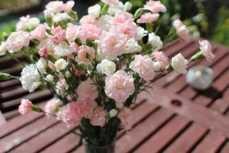 carnation-2442405_640