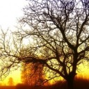 tree-77271_640