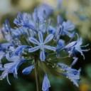blue-4351901_640