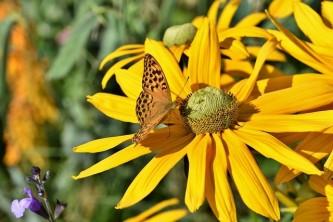 butterfly-4381234_640