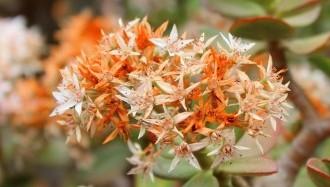floral-2563758_640