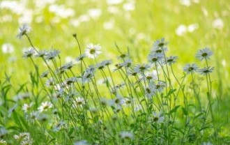 meadow-5229172_640