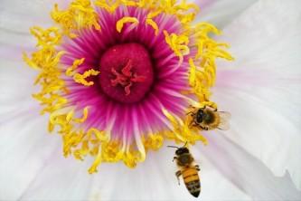 flower-5123954_640