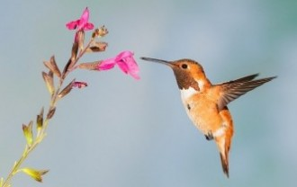 hummingbird-5255827_640