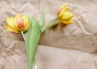 flower-3229064_640