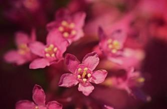 flower-5088666_640