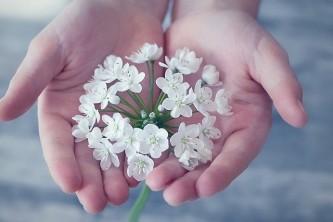 flower-1283259_640