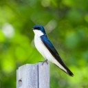 swallow-5239912_640