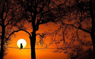 tree-3063715_640