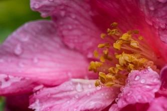 pink-5059911_640