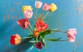 tulips-3209128_640