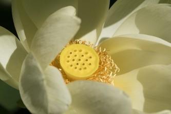 flower-4373126_640