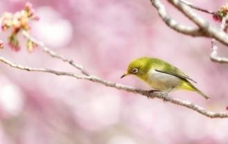 japanese-white-eye-6178082_640