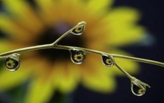 plant-3263600_640
