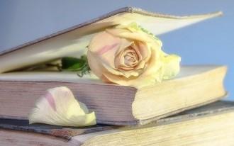 rose-2101475_640