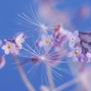 spring-4184594_640