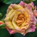 flower-6318951_640