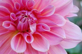 flower-1181865_640