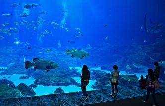 aquarium-736978_640