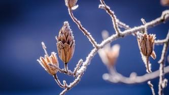 winter-598631_640