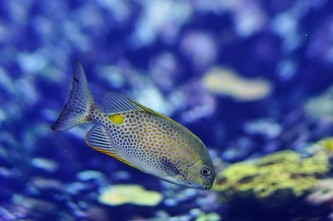 fish-1319830_640