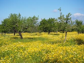 flower-meadow-1090253_640