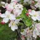 spring-1219768_640