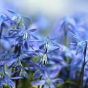spring-697755_640