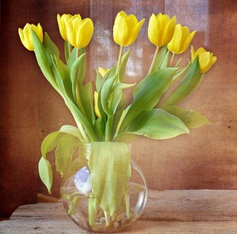 tulips-719352_640
