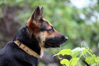 dog-723652_640
