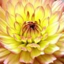 flower-1280223_640