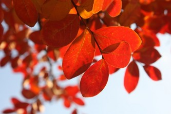 leaves-449622_640