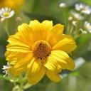 blossom-1684259_640