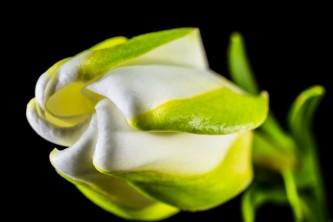 flower-301353_640