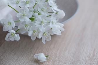 flower-1307354_640