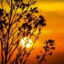 sunset-203188_640-1