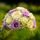 bloom-1869710_640
