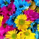 daisies-54663_640