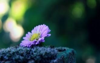 flower-1739892_640