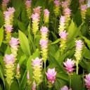 blossom-1550832_640